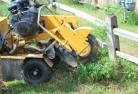 Aire Valley Stump grinding services 3